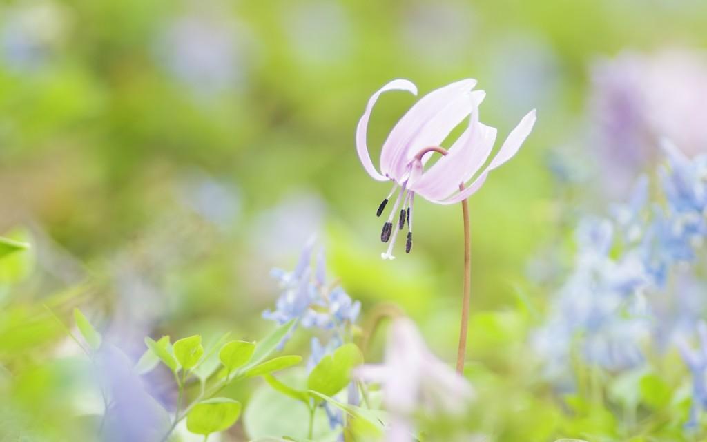 Spring_Blooms
